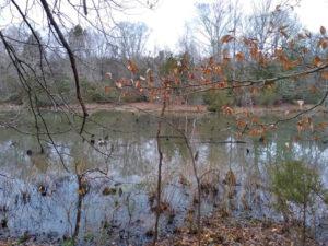Wooded, Waterfront Lot – Smithfield, VA photo